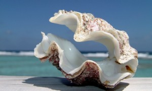 6924266-big-shell-beach