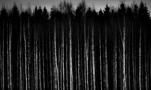 Favim.com-black-and-white-dark-forest-trees-woods-261484