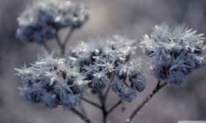 Abstract Flowers Frosted Frozen Macro Winter Nature Frosty Frost Photography Forest Desktop Wallpapers